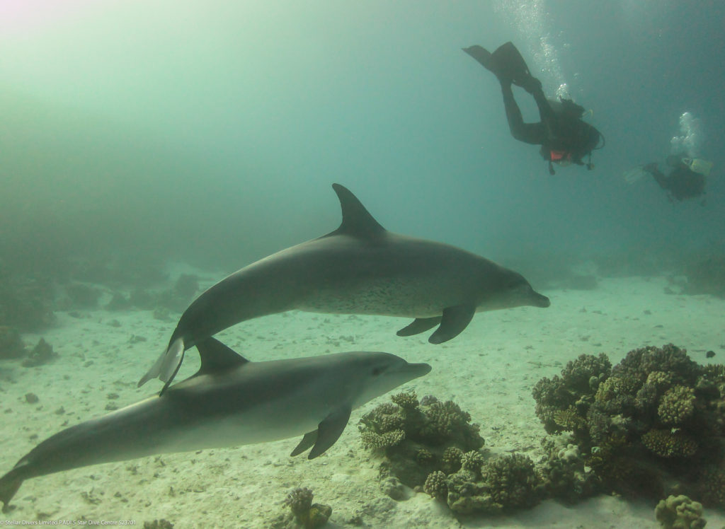 Mark Scuba Diving