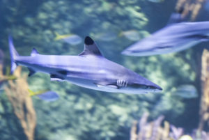 Sharks at Skegness Aquarium