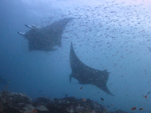 Stellar Divers - Maldives - PADI