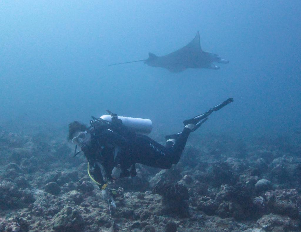 Maldives manta