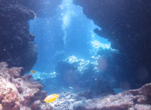 Red Sea, Stellar Divers, PADI
