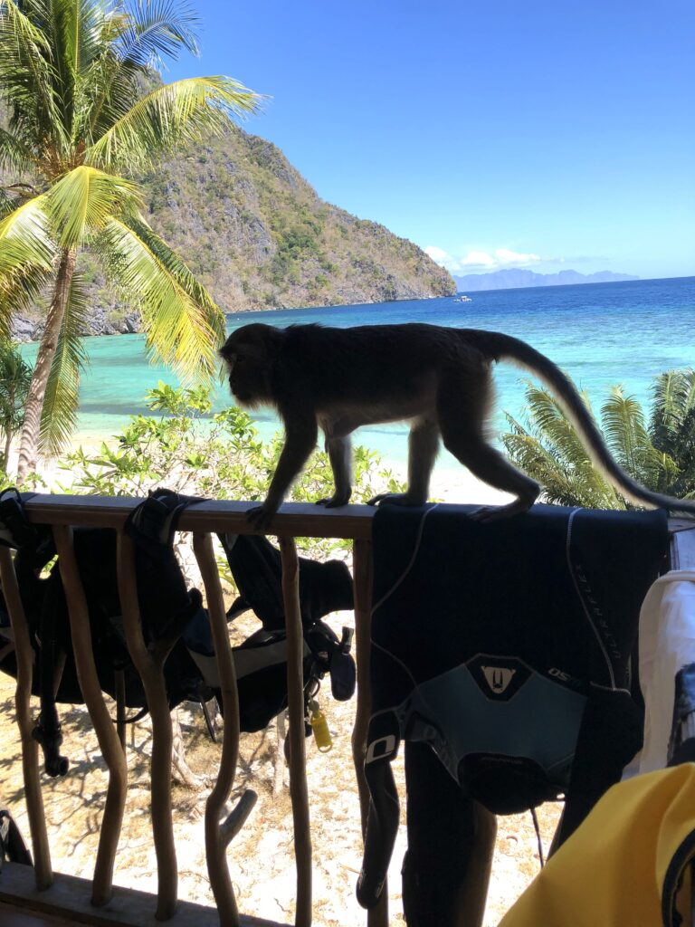 Sangat island chalets, stellar divers, philippines, padi, scuba diving trips lincolnshire