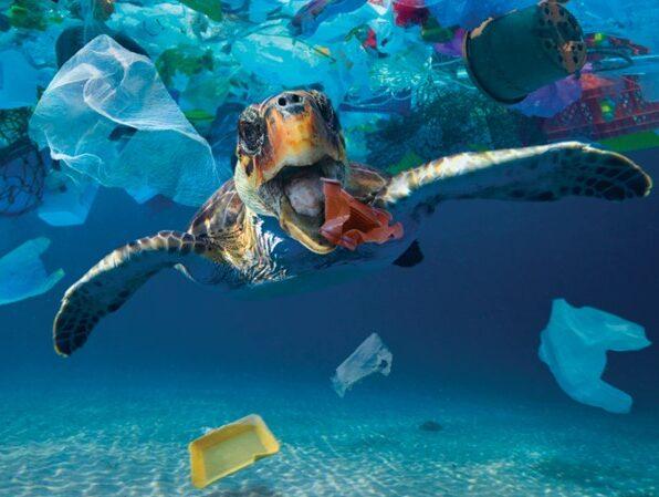 Turtle Plastic solution, stellar divers, lincoln, mission salvation